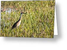 Babcock Wilderness Ranch - Sandhill Crane Greeting Card