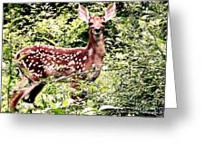 Babe In The Woods Greeting Card