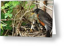 Babes In The Nest Greeting Card