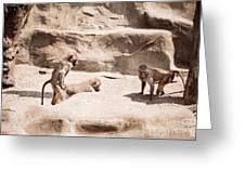 Baboons Monkeys Having Sex Greeting Card