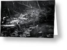 Baby Alligator Vs Mud Wasp Greeting Card