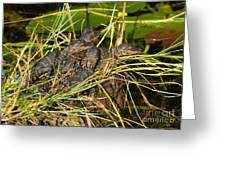 Baby Alligators Greeting Card