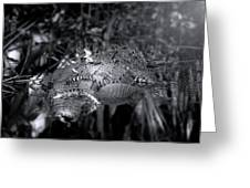 Baby Alligators On Board Greeting Card