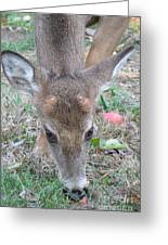 Baby Backyard Button Buck Greeting Card