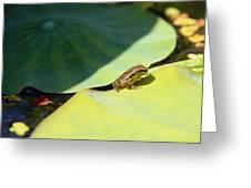 Baby Baja Tree Frog Emerges From Lotus Leaf Greeting Card