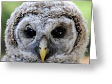 Baby Barred Owl-2 Greeting Card