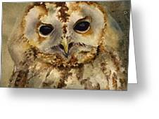Baby Barred Owl Greeting Card