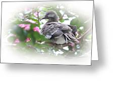 Baby Bird In Crape Myrtle Tree Greeting Card by Linda Phelps