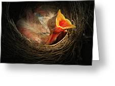 Baby Bird In The Nest With Mouth Open Greeting Card