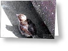 Baby Bird - Toyoung To Fly Greeting Card
