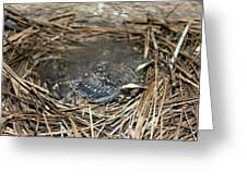 Baby Birds Greeting Card