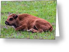 Baby Bison Greeting Card