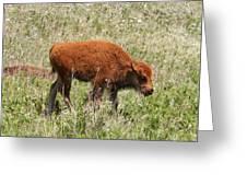 Baby Bison Greeting Card