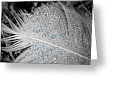 Baby Blue Dew Drops On Feather Greeting Card