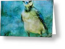 Baby Blue Jay Greeting Card