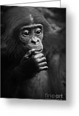 Baby Bonobo Greeting Card