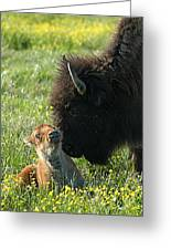 Baby Buffalo And Mother Greeting Card