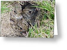 Baby Bunnies Greeting Card