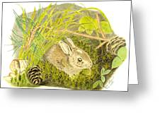 Baby Bunny Down For The Night Greeting Card