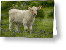 Baby Calf With Bluebonnets Greeting Card