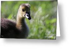 Baby Canadian Greeting Card