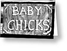 Baby Chicks Bw Greeting Card
