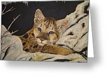 Baby Cougar In Snow Greeting Card