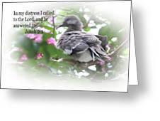 Baby Dove Jonah 2 V 2 Greeting Card