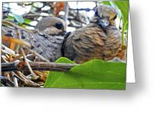 Baby Doves 2 Greeting Card