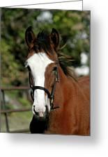 Baby Draft Horse Greeting Card