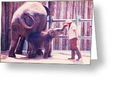 Baby Elephant At Zoo 1988 Greeting Card