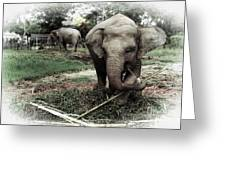 baby Elephant Color Greeting Card