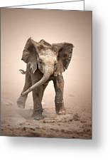 Baby Elephant Mock Charging Greeting Card