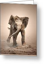 Baby Elephant Mock Charging Greeting Card