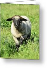 Baby Ewe Greeting Card