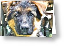 Baby Face Pup Greeting Card