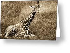 Baby Giraffe In Grasses Greeting Card