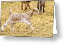 Baby Goat On The Run Greeting Card