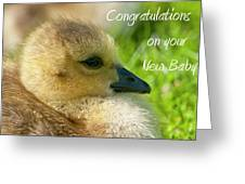 Baby Goose Card Greeting Card