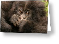 Baby Gorilla Close-up Hiding Mouth With Hands Greeting Card