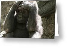 Baby Gorilla1 Greeting Card
