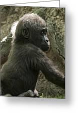 Baby Gorilla2 Greeting Card