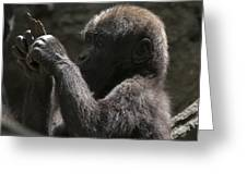 Baby Gorilla3 Greeting Card