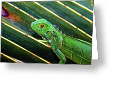 Baby Green Iguana Greeting Card