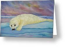 Baby Harp Seal Greeting Card