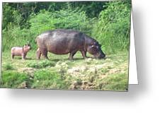 Baby Hippo 1 Greeting Card