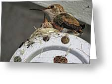 Baby Hummers 2 Greeting Card