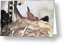 Baby Hummers 6 Greeting Card