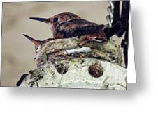 Baby Hummers Greeting Card