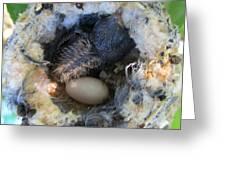 Baby Hummingbird Greeting Card